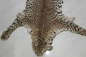 wildlife parts and species are being smuggled out of India via post offices.