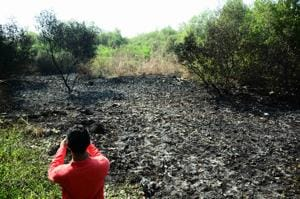 10 trees charred in fire at Palm Beach Road mangroves