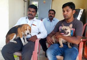 Khadakpada police recovered the stolen beagle and French bull dog.