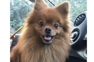 Police have checked the CCTV footage from nearby stores and have spotted two suspects in the case of a stolen Pomeranian dog from a car in Delhi's AyaNagar.