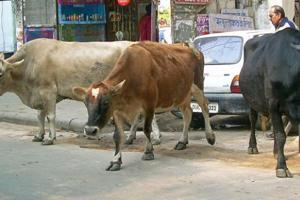 Tension in Mathura villages over cattle carcasses, FIR filed