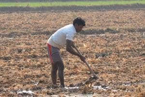 About 90% of the rural constituency in Chhattisgarh and Madhya Pradesh and 70% in Rajasthan are agricultural