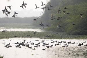 A view of Okhla bird sanctuary in Noida on Thursday, December 13, 2018. Birders say typically, over 250 species are spotted every year during the winter count.