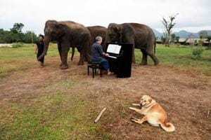 Photos: Classical music soothes ageing elephants at Thai sanctuary