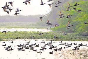 According to an official, the availability of fresh water and habitat improvement at the Okhla Bird Sancturay has paid off and resulted in birds choosing this area for nesting.