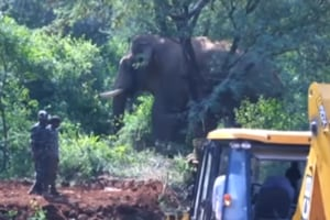 Elephant captured, relocated to Madumalai forest in 10-hour operation