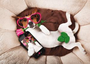 """Can a dating app help find a """"good mate"""" for a handsome dog, not a """"half-breed""""?"""