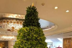 This Christmas there are all sorts of different kinds of Christmas trees on display.