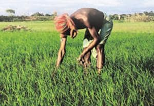 In the discourse on agriculture, fo farmer suicides are cited as the biggest proof of the agrarian crisis in the country by a large section