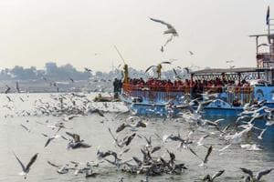 Gulls fly above River Ganga in Allahabad. Prime minister Narendra Modi, who his visiting his parliamentary constituency Varanasi, said under his government, steps to clean the river were showing results and pollutions level had declined in the river (File Photo)