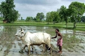 The agriculture department estimates the loan waiver to cost Rs 35,000 crore. Image for representation.
