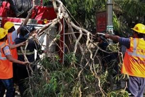 Officials remove the tree from the spot on Monday.