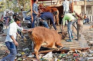 The stray cattle menace has become a matter of concern for the public and the authorities in UP.