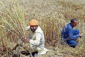 An HT analysis of a 2013 National Sample Survey Office (NSSO) report on Household Ownership and Operational Holdings in India shows that farmers from the Other Backward Class (OBC) category could be the biggest beneficiaries of this scheme.