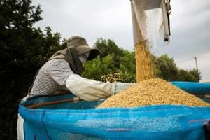 The BJP-led government in Assam announced on Wednesday it will provide a kilo of rice for Re 1 to lakhs of families living below poverty line.