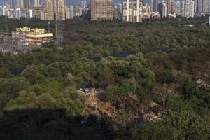 According to forest officials, the reserved forest status for the 6-ha Versova mangrove patch will ensure a stop to all illegal activities here.