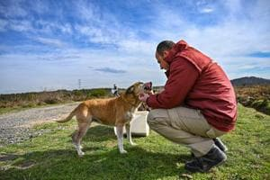 Photos: Istanbul vets ensure the well-being of stray animals