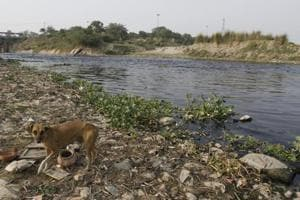 A polluted Najafgarh drain just before it joins the Yamuna river near Wazirabad in New Delhi.