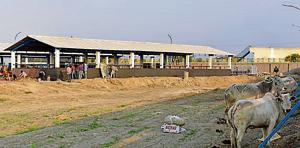 The Noida authority on Thursday said it will open a temporary 'gaushala' (cow shelter) for abandoned cows in Yamuna flood plains near Sector 135 in the next three to four days.  The new facility will accommodate about 1,500 cows, officials said.