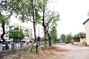 The Delhi government's proposal to transplant at least 80% trees while approving future construction projects could come at a price.