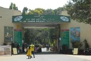 Sanjay Gandhi National Park (SGNP) has an area of 103 square kms and it is estimated the forest has between 35 and 40 leopards.