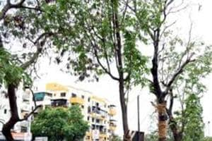 Struggling to save trees, a major victim of the city's unending construction spree, the Delhi government last week announced a tree transplantation policy.  (HT PHOTO)