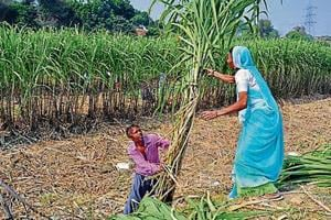 A cooperative bank official said the government will identify eligible farmers and approach them with the loan offer.