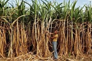 Sugarcane dues have crossed Rs 20,000 crore until February of this marketing year (October-September).