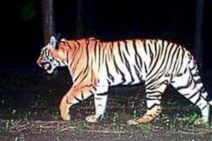 An injured adult tigress, aged between seven and eight, died on Sunday at the Tipeshwar Wildlife Sanctuary in Yavatmal district after forest officials tranquillised it in an attempt to rescue her.