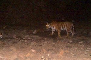 A team of six guides, a livestock development officer (LDO) – authorised veterinarian, and the driver tried to rescue the tigress using a net