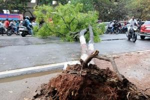 After protest, Tree-felling order at green park on hold