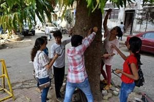 In Mumbai, 5-7K nails removed from 2,000 trees in one year