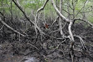 Photos: Climate change makes fishing in Brazil mangroves a swampy affair