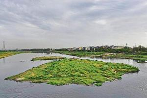Bring in corporates to protect Yamuna floodplains, NGT panel recommends
