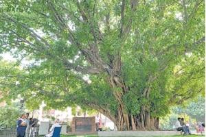 Delhiwale: Constitution Club's Paakar tree