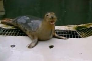 Scientists train grey seals to 'sing' like humans- Watch video