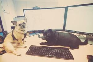'Aww-dorable' canine pictures flood Twitter on 'Take your dog to work day'