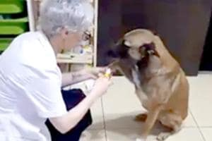 Stray dog runs into pharmacy for help, waits patiently while being treated