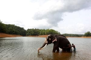Photos: Kerala set to house India's first elephant rehabilitation centre