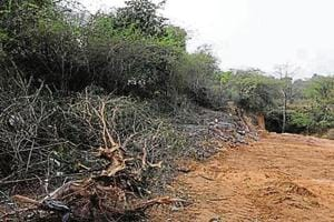 Activists see red over forest dept's plan to plant 22K trees 32km from deforested site in Chauma village