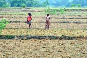 Drought fear looms large in Jharkhand as 14 districts face 40- rainfall deficit