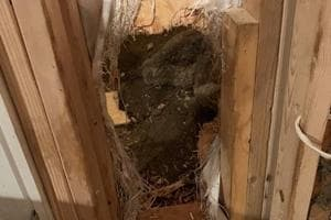 Bear walked into home, broke out by smashing through wall