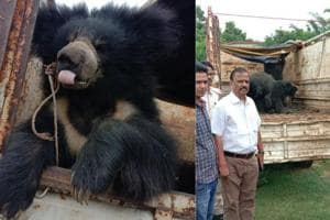 Five sloth bears rescued from a village in Deoghar