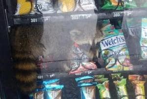 Police catch unlikely 'thief' from vending machine red-handed- This happened