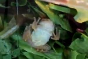 It's alive- Woman finds live frog in pack of lettuce- Watch