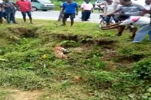 Scary moment injured leopard attacks man clicking its pics in West Bengal- Watch
