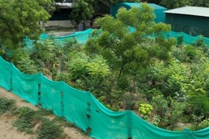 Should Mumbai civic body's gardens charge fee? Locals divided