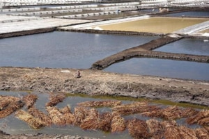 Mumbai will drown if development is allowed on salt pans