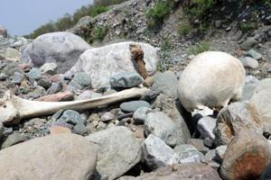 'Skeleton lake' in Uttarakhand contains bones of mysterious European migrants: Study
