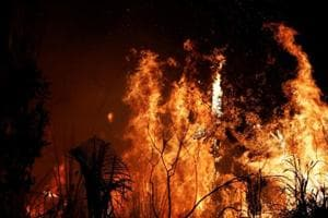 Amazon rainforest fires: How it affects the world and you